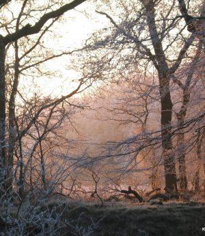 Winter landschap - Kunsthuis kort